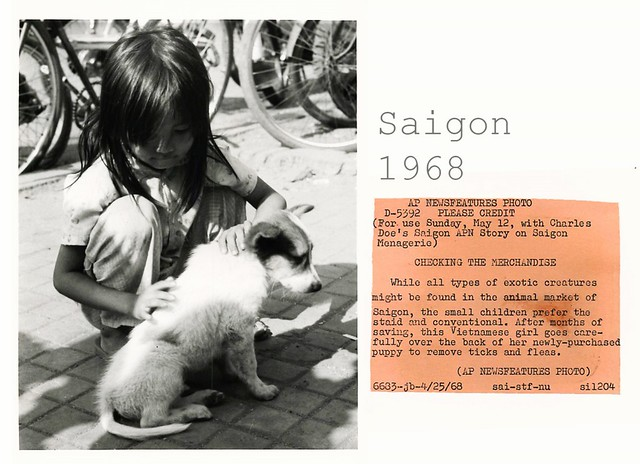 CHECKING THE MERCHANDISE - 1968 Vietnamese Girl with Her Newly Purchased Puppy in Saigon
