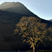 Buttermere - The Tree