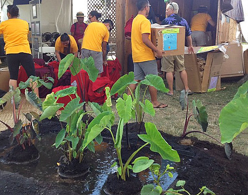 <p>University of Hawaii moving onto the National Mall for the Smithsonian Folklife Festival</p>