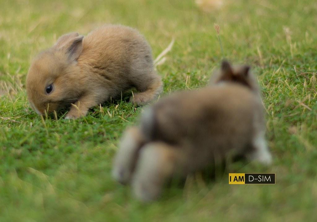 Baby Rabbit (8)