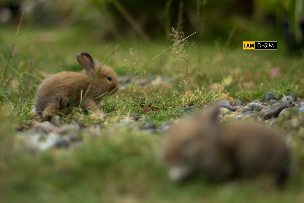 Baby Rabbit (17)