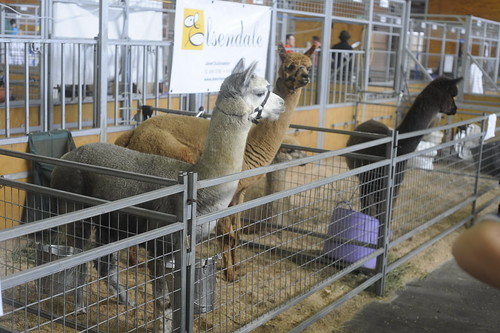 Easter Show 2012