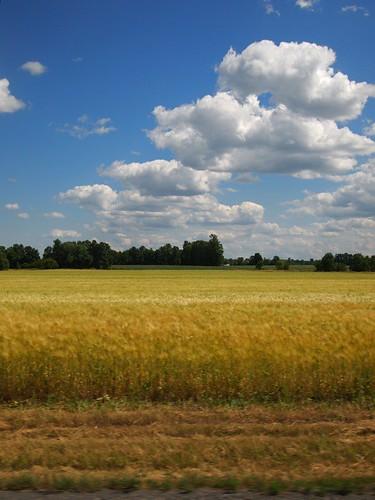 Ontario fields