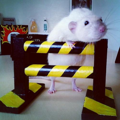 Stop that RAT!
