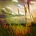 --- summer grasses --- by xandram