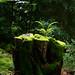 Esprit de la forêt by Le Monolecte