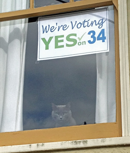 morty says yes on 34 too!.jpg