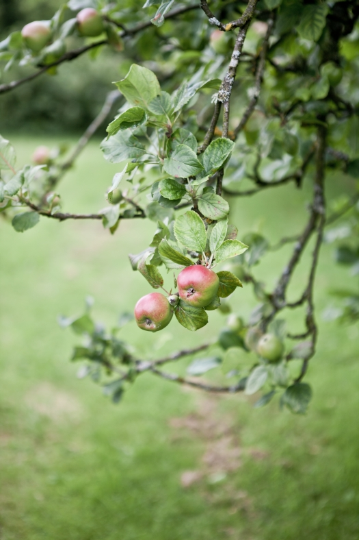 Belle Isle Garden & Orchard - N.Ireland