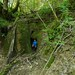 Cascade du Trou de Lavau - Extrème amont du ruisseau de Cornebouche (Durnes) Inedite ? by francky25