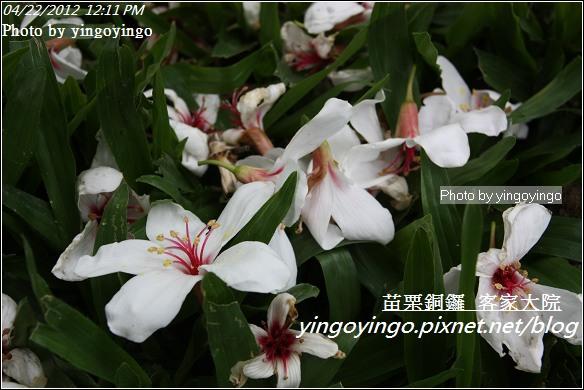 苗栗銅鑼_客家大院20120422_I3278