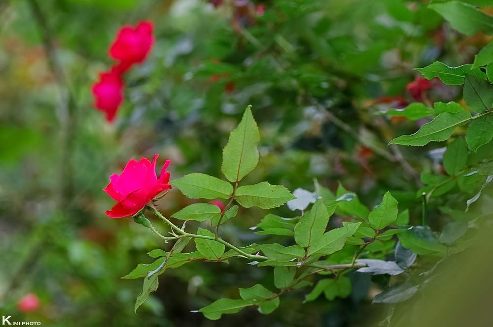 我的花花世界
