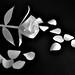 Paper Flower & Petals
