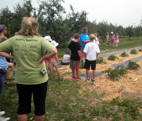 tomato garden!