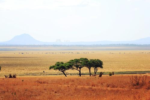 africa park parco elephant landscape tanzania safari paesaggio tarangire elefanti africansky
