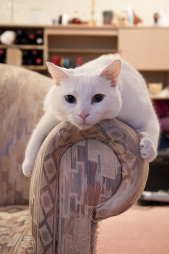 Armrest hugging kitty