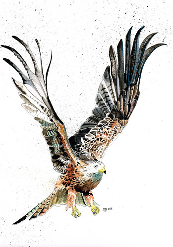 Red Kite (Nameless) by jina11