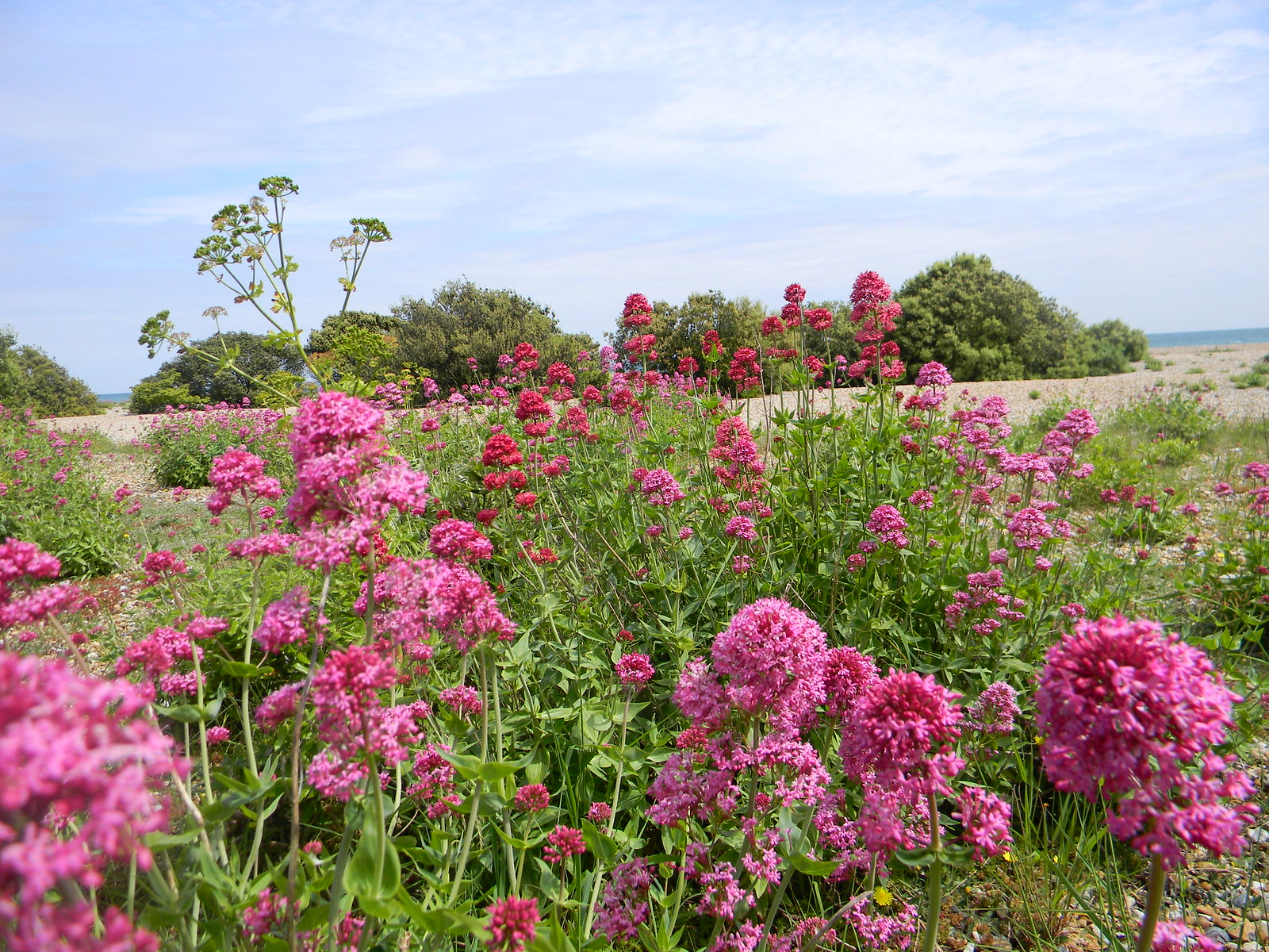 Valerian, Deal Beach Deal to Dover