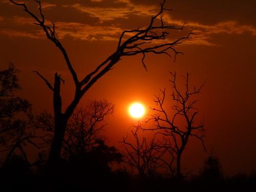 Chobe Sunset Botswana