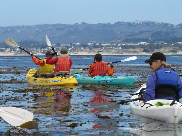 Kayakers heading towards the harbor