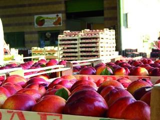 Il mercato ortofrutticolo di Cesena [Foto copyright Corriere Cesenate]