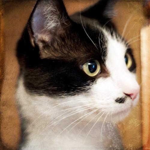 Mustache Cat by The Shutterbug Eye™