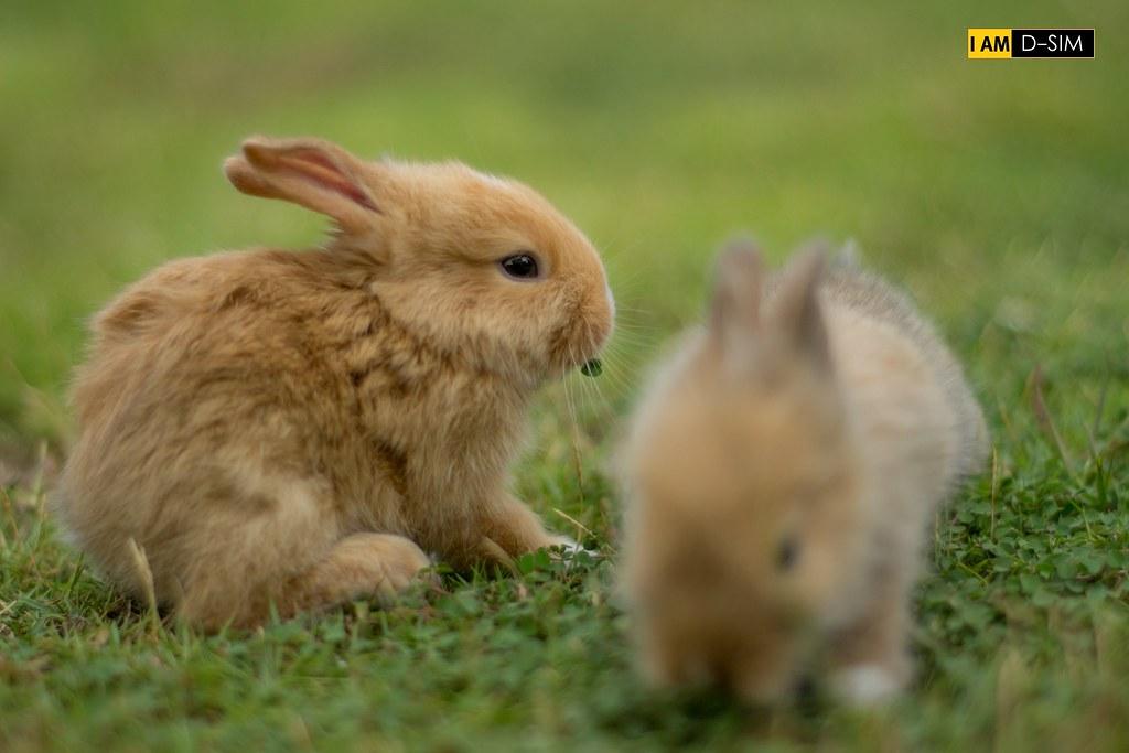 Baby Rabbit (12)