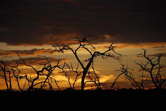 Amanecer en el parque nacional de Chobe, Botsuana.