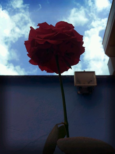 Flower to The Sky by Rogsil