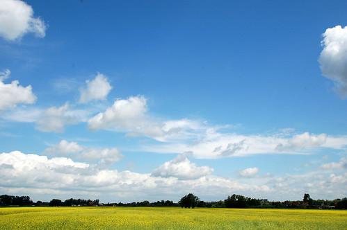 sky day cloudy nederland