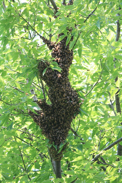 Swarm Settled