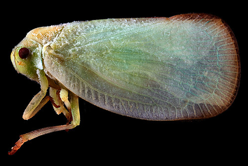 Plant-Hopper,-side_2012-07-06-19.25.23-ZS-PMax