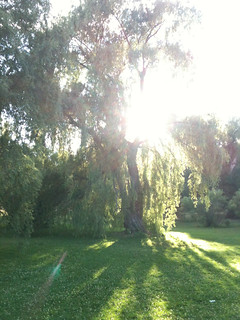 Sun setting at the Arboretum