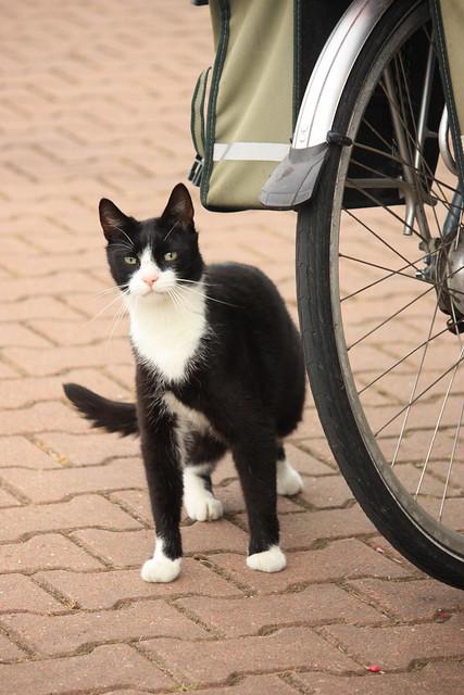 D Wormer Cat Dog  Oz   Urthpet