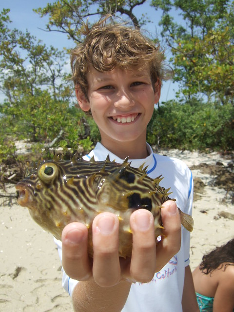 Michael with a striped burrfish