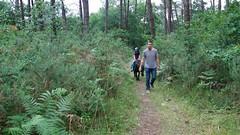 Dans la forêt landaise