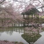 Cherry-Blossom-2-150x150
