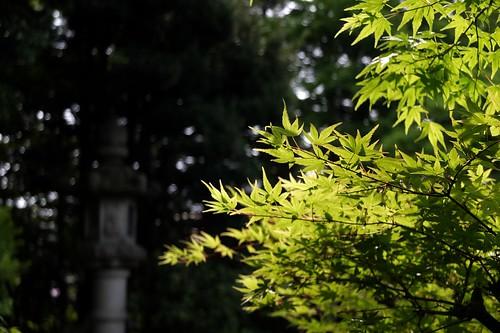 隆泉苑 庭園