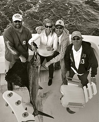 atlantic_sailfish_bw