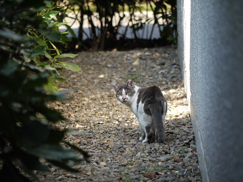 猫@中央区