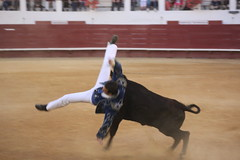 animal sports, cattle-like mammal, bull, event, sports, matador, performance, bullfighting,