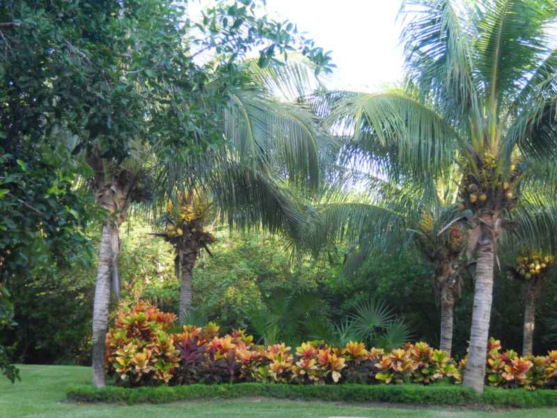Jardines Bah�a Pr�ncipe 4