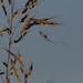 Spider_1393.jpg