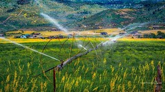 Irrigation #utah #kamas #ranch #ranchlife #irrigation #irrigationsystem #farmlife #farm