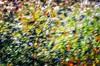 #ravaldinoinmonte #forlí #romagna #emiliaromagna #italy #stefanoberti #winemaker #farmer #wine #redwine #italianwine #italianstyle #sangiovese #vintage #vinery #wineyard #instawine #viticulture #nature #landscape #paesaggio
