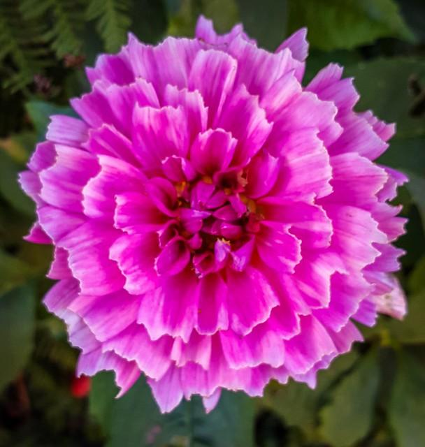 19 8 Garden Flower