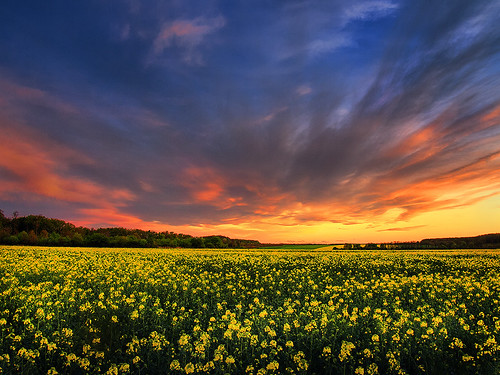 sunset sky colors skyscape landscape hungary hdr canola