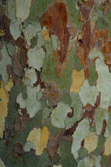 Paint by numbers sycamore