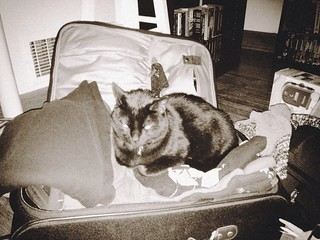 A cat is living in my suitcase.