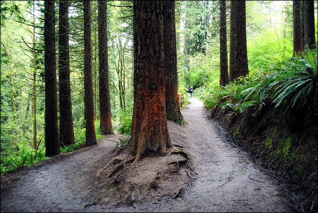 Wildwood Trail - Hoyt Arboretum - Portland, Oregon
