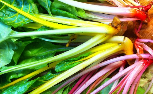 Swiss chard rainbow by torresk